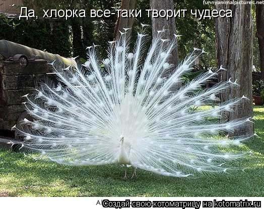 Котоматрица: Да, хлорка все-таки творит чудеса