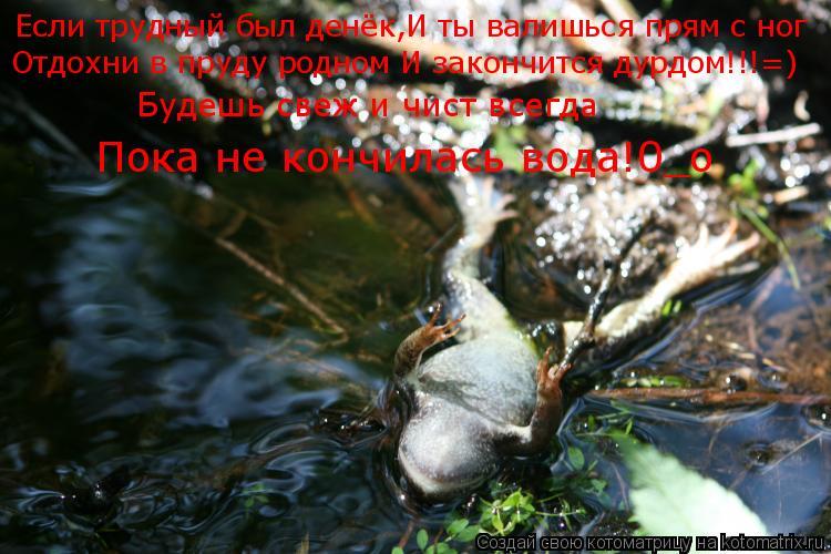 Котоматрица: Если трудный был денёк,И ты валишься прям с ног Отдохни в пруду родном И закончится дурдом!!!=) Будешь свеж и чист всегда Пока не кончилась во