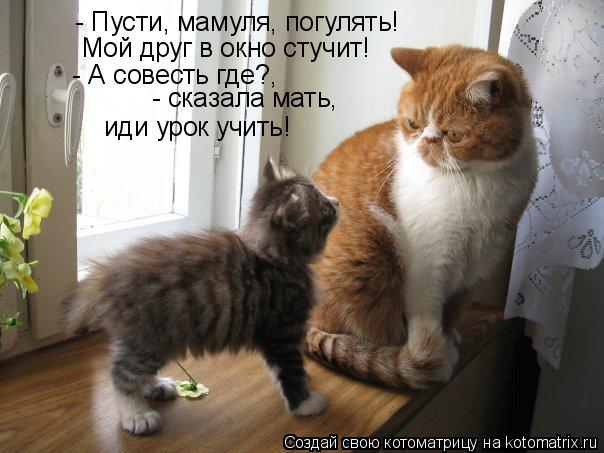 Котоматрица: Мой друг в окно стучит! - Пусти, мамуля, погулять! - А совесть где?,  - сказала мать, иди урок учить!