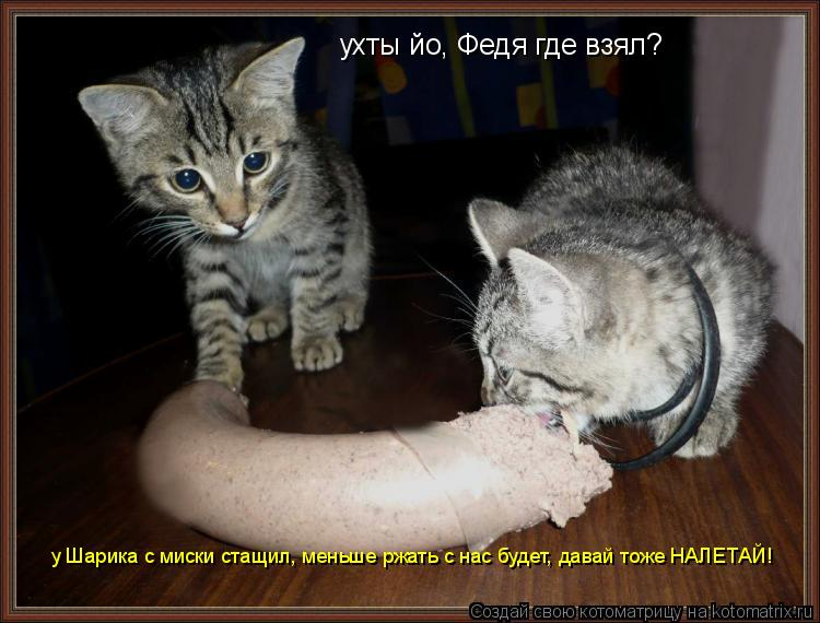 Котоматрица: ухты йо, Федя где взял? у Шарика с миски стащил, меньше ржать с нас будет, давай тоже НАЛЕТАЙ!