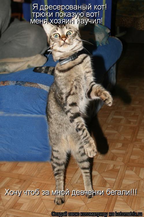 Котоматрица: Я дресерованый кот! трюки показую вот! меня хозяин научил! Хочу чтоб за мной девченки бегали!!!