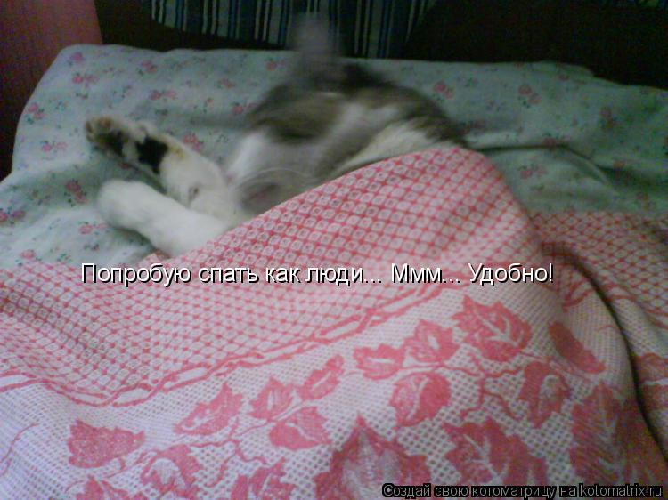 Котоматрица: Попробую спать как люди... Ммм... Удобно!
