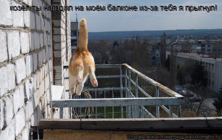 Котоматрица: козёл ты нагадил на моём балконе из-за тебя я прыгнул! козёл ты нагадил на моём балконе из-за тебя я прыгнул!