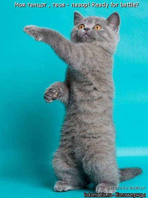Котоматрица: Моя танцот , твоя - пазор! Ready for battle? Photo by Bo3DyX
