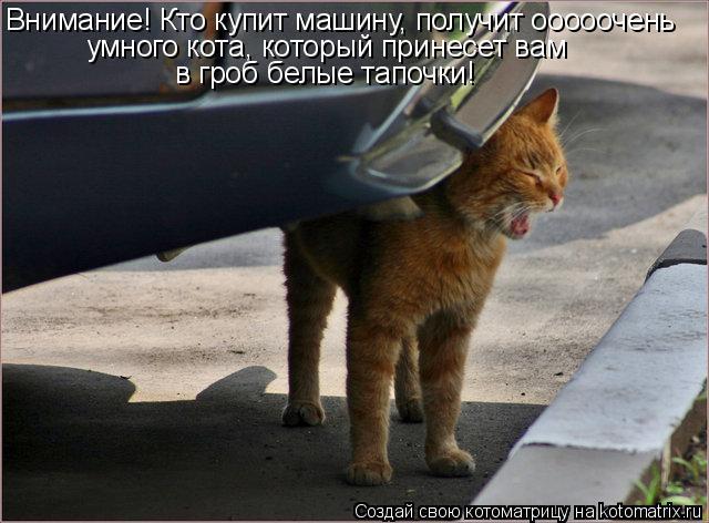 Котоматрица: Внимание! Кто купит машину, получит ооооочень умного кота, который принесет вам  в гроб белые тапочки!