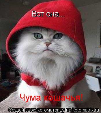 Котоматрица: Вот она... Чума кошачья!