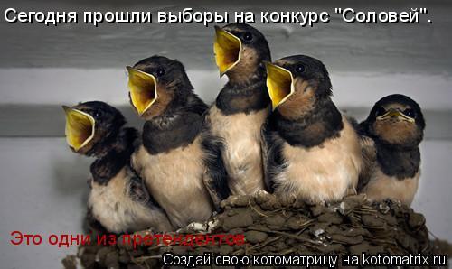 """Котоматрица: Сегодня прошли выборы на конкурс """"Соловей"""". Это одни из претендентов."""