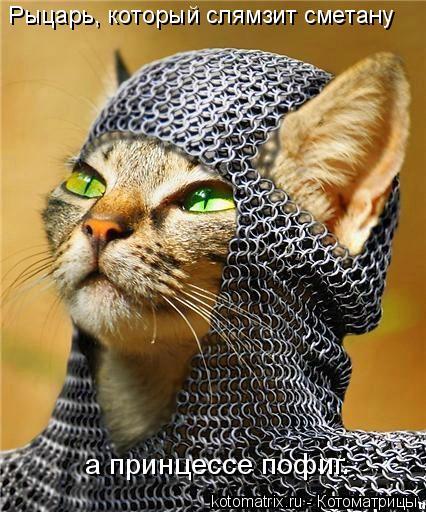 Котоматрица: Рыцарь, который слямзит сметану а принцессе пофиг.