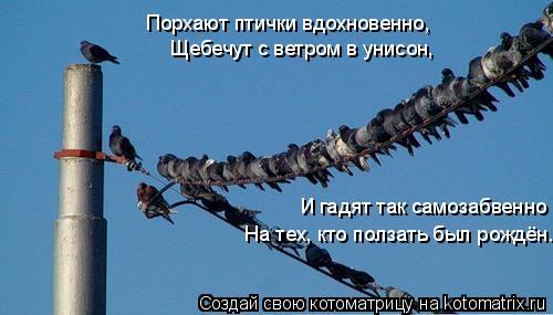 Котоматрица: Порхают птички вдохновенно,  Щебечут с ветром в унисон,  И гадят так самозабвенно На тех, кто ползать был рождён.