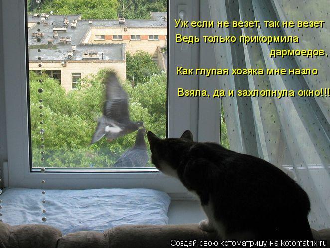 Котоматрица: Уж если не везет, так не везет Ведь только прикормила  дармоедов, Как глупая хозяка мне назло Взяла, да и захлопнула окно!!!