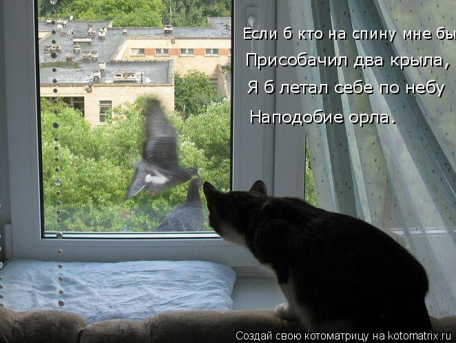 Котоматрица: Присобачил два крыла,  Если б кто на спину мне бы Я б летал себе по небу Наподобие орла…