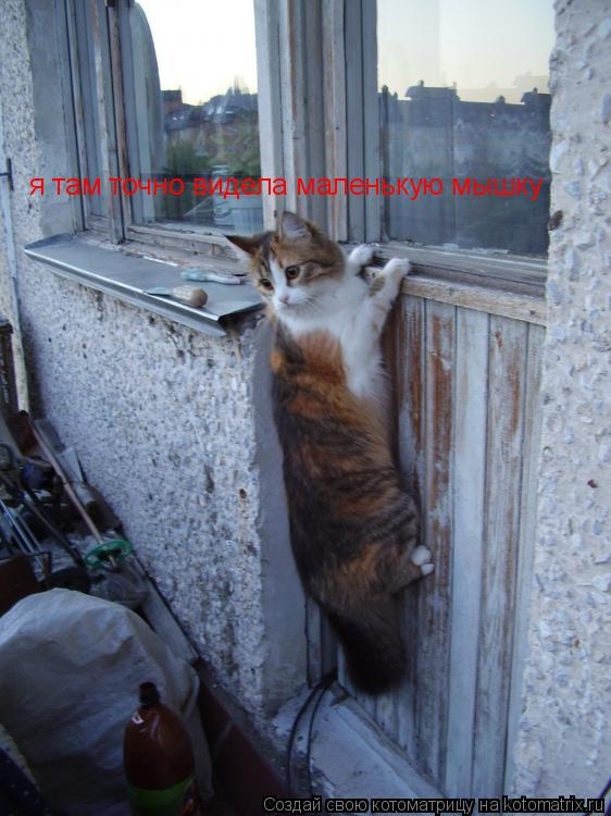 Котоматрица: я там точно видела маленькую мышку