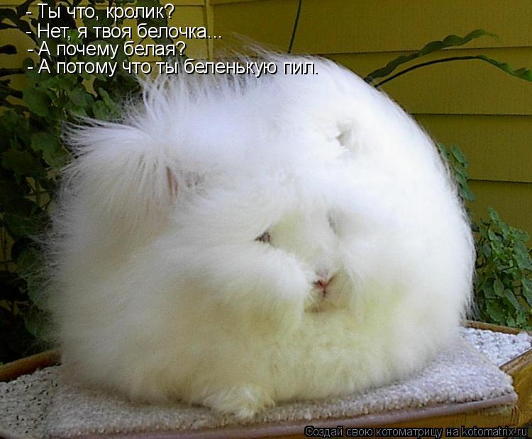 Котоматрица: - Ты что, кролик? - Нет, я твоя белочка... - А почему белая? - А потому что ты беленькую пил.