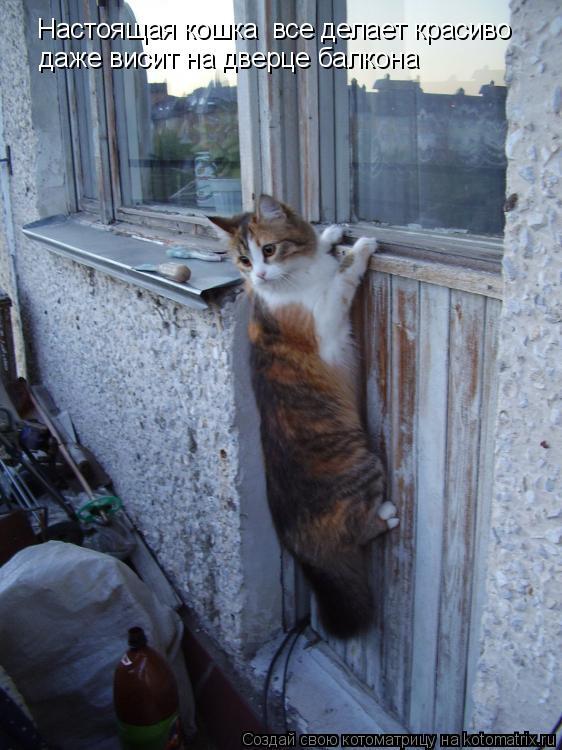 Котоматрица: Настоящая кошка все делает красиво даже висит на дверце балкона