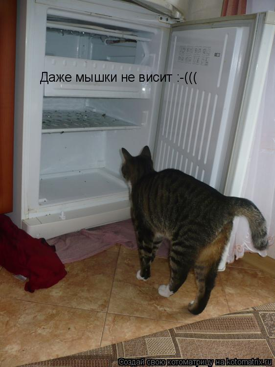Котоматрица: Даже мышки не висит :-(((