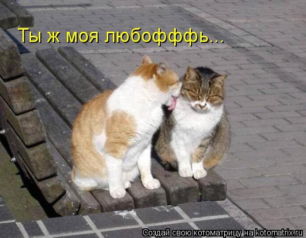 Котоматрица: Ты ж моя любофффь...