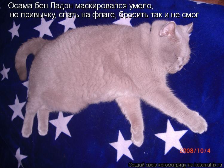 Котоматрица: но привычку, спать на флаге, бросить так и не смог  Осама бен Ладэн маскировался умело,
