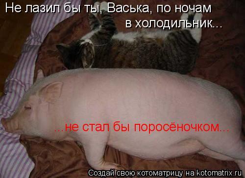Котоматрица: в холодильник... Не лазил бы ты, Васька, по ночам ...не стал бы поросёночком...