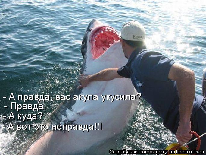 Котоматрица: - А правда, вас акула укусила?  - Правда.   - А куда?  - А вот это неправда!!!