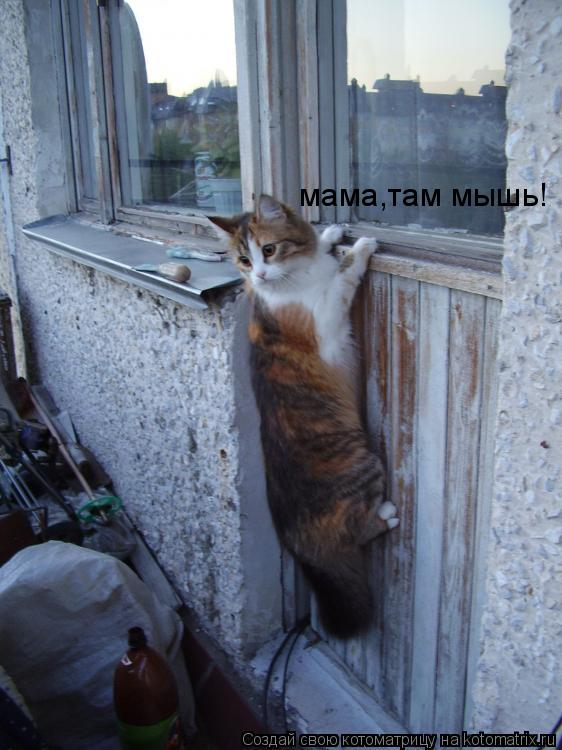 Котоматрица: мама,там мышь!