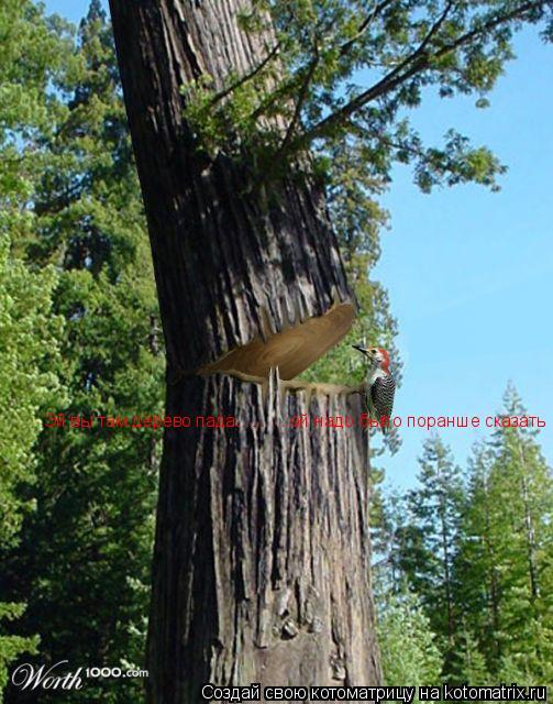Котоматрица: Эй вы там дерево пада.......... ой надо было поранше сказать