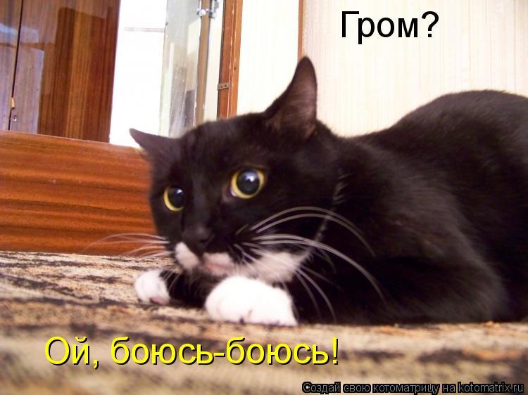 Котоматрица: Гром?  Ой, боюсь-боюсь!