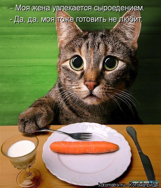 Котоматрица: - Моя жена увлекается сыроедением. - Да, да, моя тоже готовить не любит.