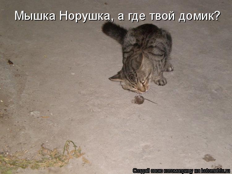 Котоматрица: Мышка Норушка, а где твой домик?