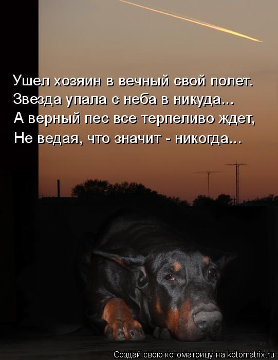 Котоматрица: Ушел хозяин в вечный свой полет. Звезда упала с неба в никуда... А верный пес все терпеливо ждет, Не ведая, что значит - никогда...