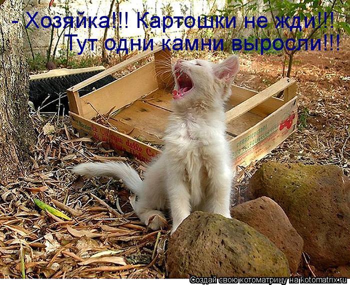 Котоматрица: - Хозяйка!!! Картошки не жди!!! Тут одни камни выросли!!!
