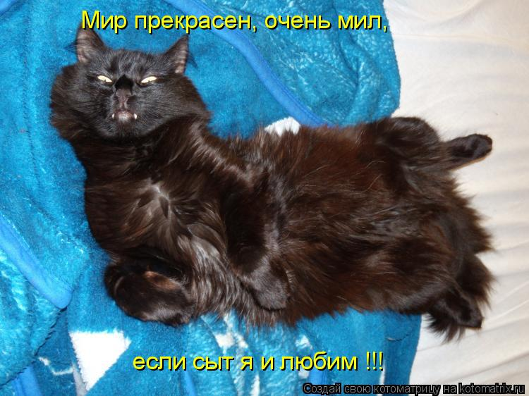 Котоматрица: Мир прекрасен, очень мил, если сыт я и любим !!!