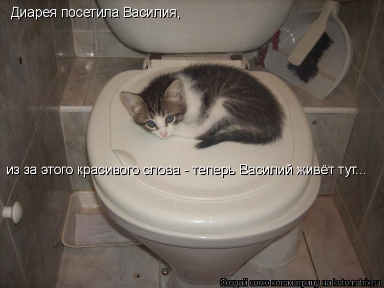 Котоматрица: Диарея посетила Василия,  из за этого красивого слова - теперь Василий живёт тут...