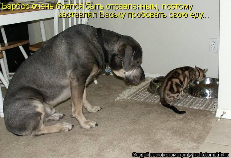 Котоматрица: Барбос очень боялся быть отравленным, поэтому заставлял Ваську пробовать свою еду...