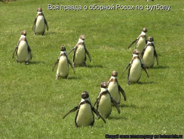 Котоматрица: Вся правда о сборной Росси по футболу.