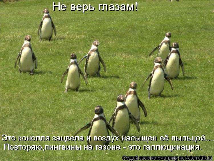 Котоматрица: Не верь глазам! Это конопля зацвела и воздух насыщен её пыльцой.... Повторяю,пингвины на газоне - это галлюцинация.