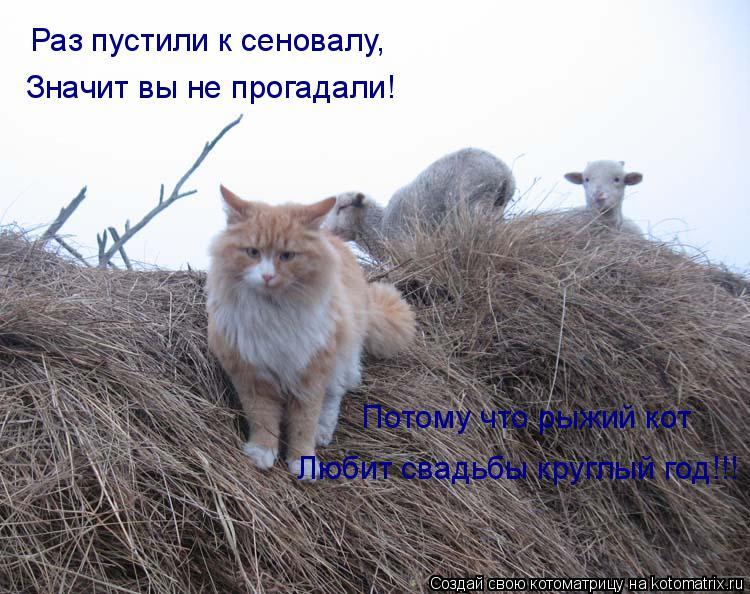 Котоматрица: Раз пустили к сеновалу, Значит вы не прогадали! Потому что рыжий кот Любит свадьбы круглый год!!!