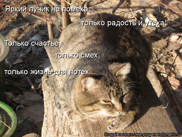 Котоматрица: Яркий лучик не помеха, только радость и утеха! Только счастье, только смех, только жизнь для потех...