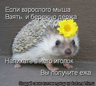 Котоматрица: Если взрослого мыша Взять, и бережно держа Напихать в него иголок Вы получите ежа.