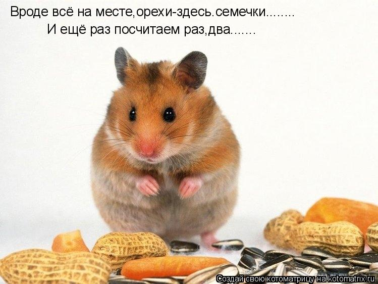 Котоматрица: Вроде всё на месте,орехи-здесь.семечки........ И ещё раз посчитаем раз,два.......