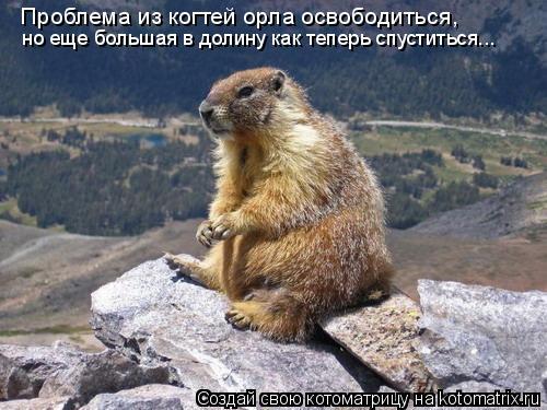 Котоматрица: Проблема из когтей орла освободиться, но еще большая в долину как теперь спуститься...