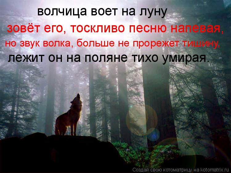 Котоматрица: волчица воет на луну зовёт его, тоскливо песню напевая, но звук волка, больше не прорежет тишину, лежит он на поляне тихо умирая.