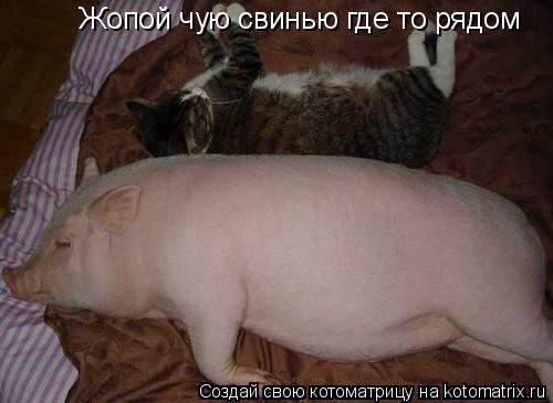 Котоматрица: Жопой чую свинью где то рядом