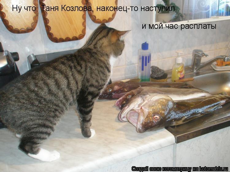 Котоматрица: Ну что, Таня Козлова, наконец-то наступил и мой час расплаты
