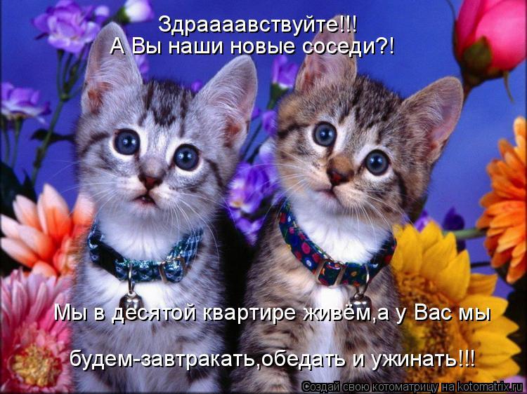 Котоматрица: Здраааавствуйте!!! А Вы наши новые соседи?! Мы в десятой квартире живём,а у Вас мы будем-завтракать,обедать и ужинать!!!