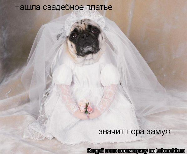 Котоматрица: Нашла свадебное платье значит пора замуж....