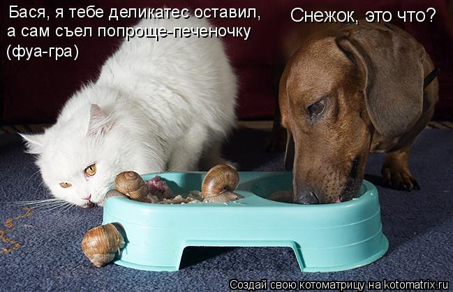 Котоматрица: Снежок, это что? Бася, я тебе деликатес оставил, а сам съел попроще-печеночку (фуа-гра)
