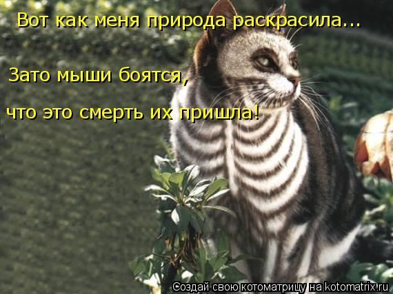 Котоматрица: Вот как меня природа раскрасила... Зато мыши боятся, что это смерть их пришла!