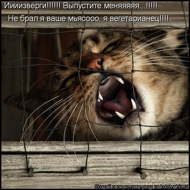 Котоматрица: Иииизверги!!!!!! Выпустите меняяяяя...!!!!! Не брал я ваше мьясооо, я вегетарианец!!!!