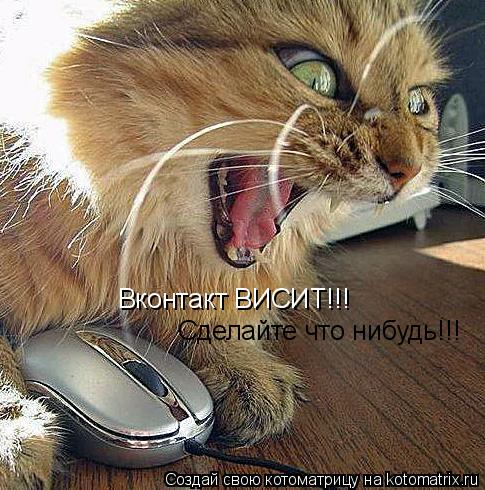 Котоматрица: Вконтакт ВИСИТ!!! Сделайте что нибудь!!!
