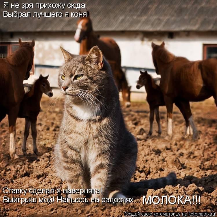 Котоматрица: Я не зря прихожу сюда, Выбрал лучшего я коня! Выигрыш мой! Напьюсь на радостях... Ставку сделал я наверняка! МОЛОКА!!!